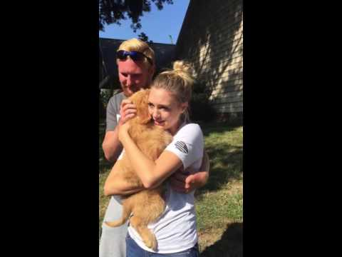 surprise daughter with puppy (goldendoodle)