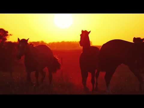 Os Potros nos Domaram GAP Genética e Cavalos Crioulos