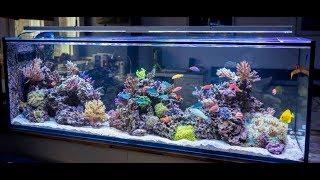 Beautiful Cichlid Fish, Stunning Aquarium and Relaxing Music of Span