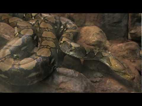 アミメニシキヘビ / 網紋蟒(台北市立動物園 )