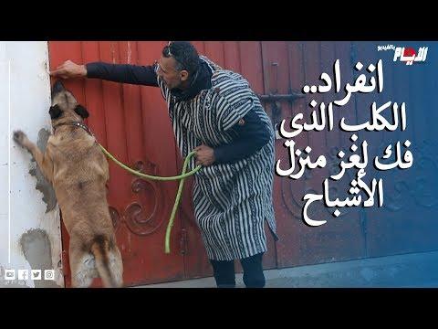 حصري.. مروض كلاب يدخل على الخط في قضية الأصوات الغريبة بمنزل بآيت ملول