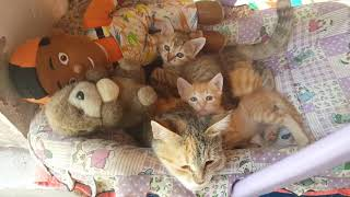 "TOP10/Funny CATS!MOM""S LOVE,SWEET;S BABIES,AND Playing Together, 02,18,2019,Cute Kittens Compilation"