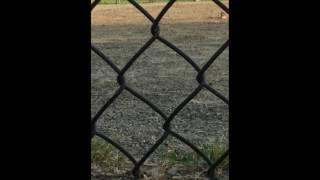 Eyewitness video captures congressional baseball shooting