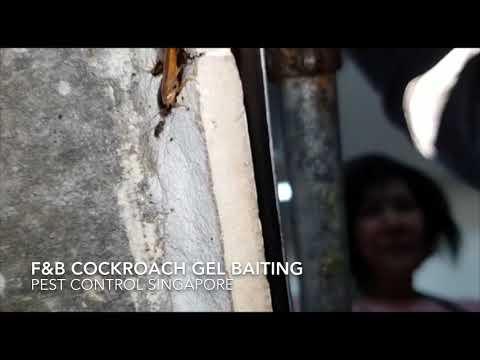 F&B Cockroach Gel Baiting - Pest Control Singapore