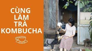 Hướng dẫn pha trà lên men Kombucha