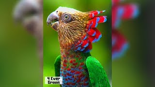 10 Most Beautiful Parrots on Planet Earth