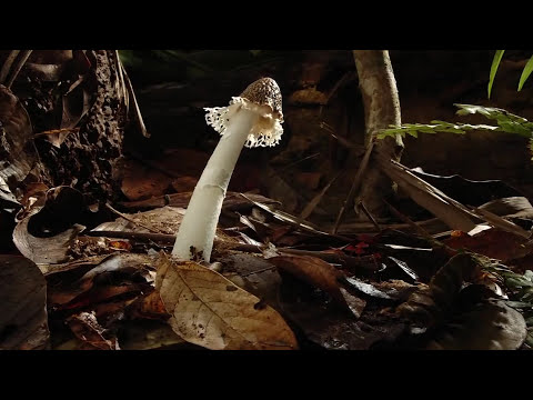 When Death Happens - Alan Watts [4K] - Smashpipe education