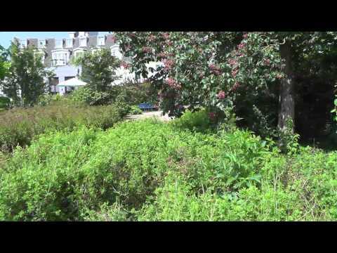 Der Pulheimer Stadtgarten eine kleine Nachbetrachtung.