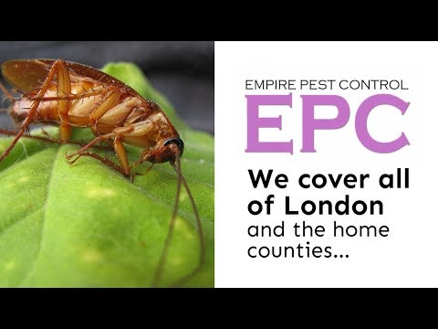 COCKROACH CONTROL LONDON UK ~ GET RID OF COCKROACHES ~ EMPIRE PEST CONTROL LONDON