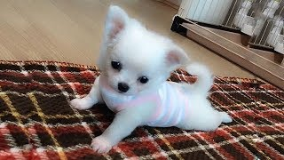 Cute is Not Enough - Funny Cats and Dogs Compilation #68
