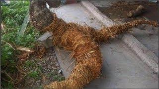 Ông đào được rễ cây hình người liền bán vội, không ngờ 3 ngày sau ông vô cùng hối hận