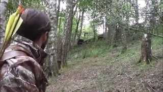 INSTINCTIVE ARCHERY ACCURACY AND FOCUS