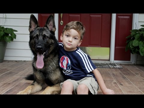 Loyal German Shepherd Helps Family With The Chores: SUPERPOWER DOGS