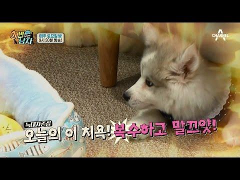 [미공개] 차우차우&허스키의 꽁냥꽁냥 대기실 현장!_웹오리지널 ver