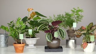 Common Houseplant Problems and How to Fix Them - Martha Stewart