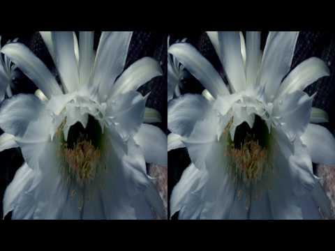 Царство растений 3 серия-Выживание. FullHD 3D (Горизонтальная анаморфная стереопара)