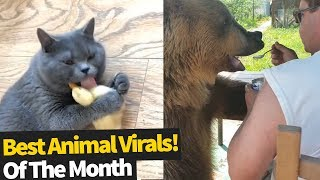 Top 40 Viral Animal Videos Of the Month - June 2019