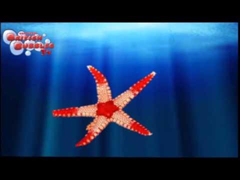 los animales del mar para niños de infantil y primaria