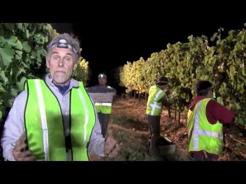 Sunny Slope 2014 Merlot Harvest