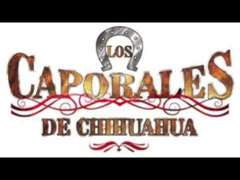 Los Caporales De Chihuahua,Los 500 Novillos.