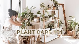 How To Care For Indoor Plants + GREENIFY YOUR SPACE