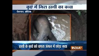 Elephant calf rescued from a pit in forests..