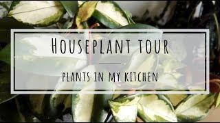 Houseplant tour: plants in my kitchen!