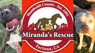 My Favorite Place on Earth: Miranda's Animal Rescue - A No-Kill Shelter (Re-Upload)