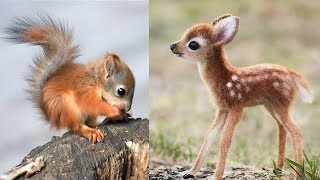 Cute baby animals Videos Compilation cute moment of the animals #3