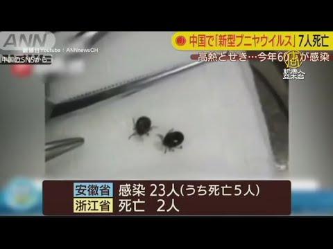 中國多省傳出「新布尼亞病毒」62人感染7人死亡