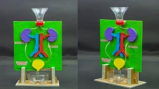School Science Projects | Kidney Working Model
