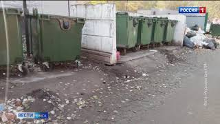 Центр Омска атаковали крысы