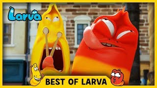 LARVA | BEST OF LARVA | Funny Cartoons for Kids | Cartoons For Children | LARVA 2017 WEEK 40