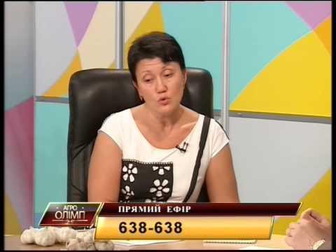 Рынок чеснока в Украине и мире