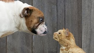 Cats vs. Dogs: Who's Cuter?