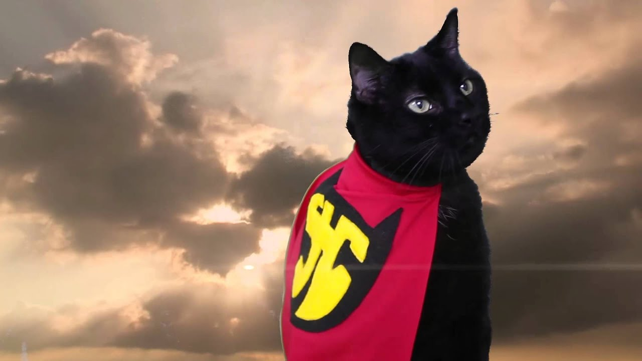n2 the talking cat s2 ep18 super hero cat official