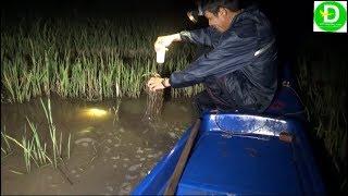 Thả câu chai nhựa dính quái vật trên ruộng l Fishing