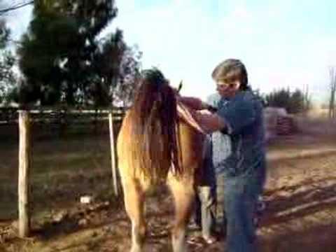 Epidurala anestezija kod konja