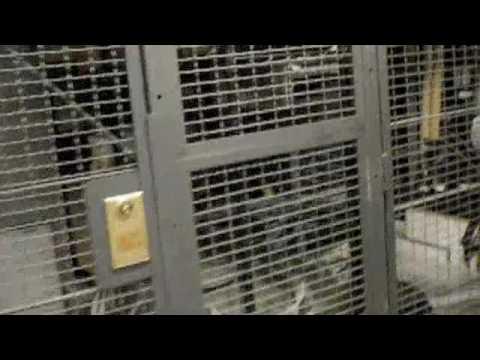 Smoke Damage New York - Maxons Restorations