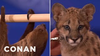 Animal Expert David Mizejewski: Sloth & Cougar Kitten  - CONAN on TBS