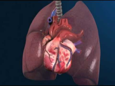 Animated human heart - photo#49