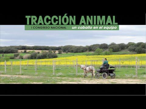 """I Congreso Nacional de Tracción Animal """"Un caballo en el equipo"""""""