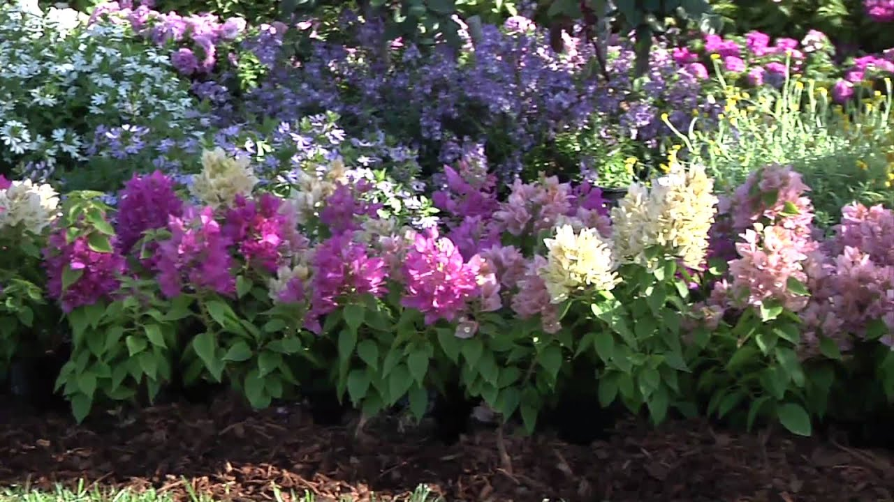 Plant Beautiful, Low-Maintenance Beds & Borders - YouTube