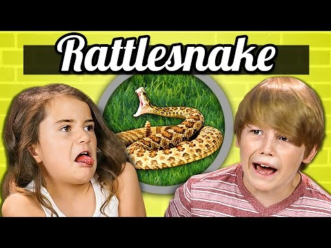 Kids react to how animals eat their food videomoviles com