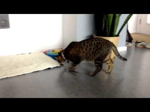 The Adventures of Oskar the Blind Cat and Klaus - Episode 5 - Blind Mouser