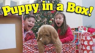 PUPPY IN A BOX! Christmas Haul & Surprise Unboxing ft. PuppyTube!
