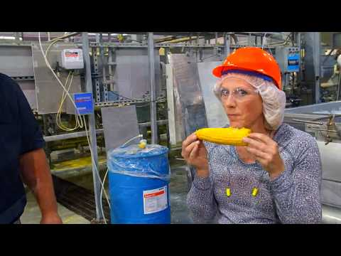 WaGrown Sweet Corn S3E4: How Corn is Processed