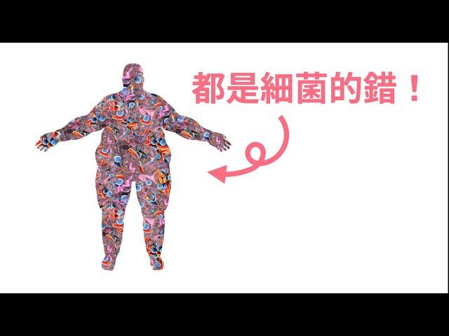 腸道菌害人發胖?