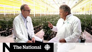 Canadian cannabis producer Aphria on what's next after legalization | Extended Interview
