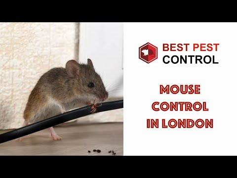 Qualified Vermin Control From Best Pest Control in London